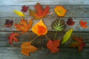 How to Use Fall Leaves in the Garden by Seasonal Wisdom
