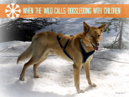 When the Wild Calls: Dogsledding with Children by FrogMom