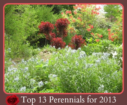Top 13 Perrenials for 2013 by Gardening Gone Wild