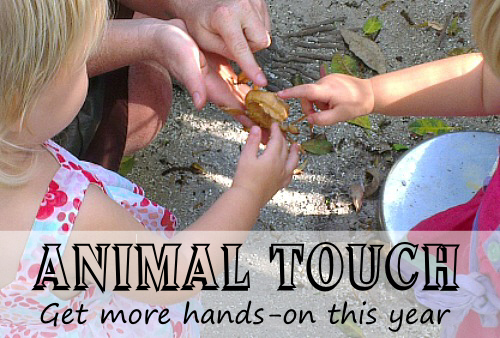 Animal Touch: Get More Hands On This Year by Wildlife Fun 4 KidsAnimal Touch: Get More Hands On This Year by Wildlife Fun 4 Kids