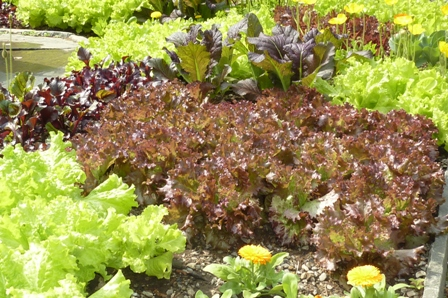 42 Top Seeds for 2013 ~From Some Favorite Gardeners and Seed Sources by Gardening Gone Wild