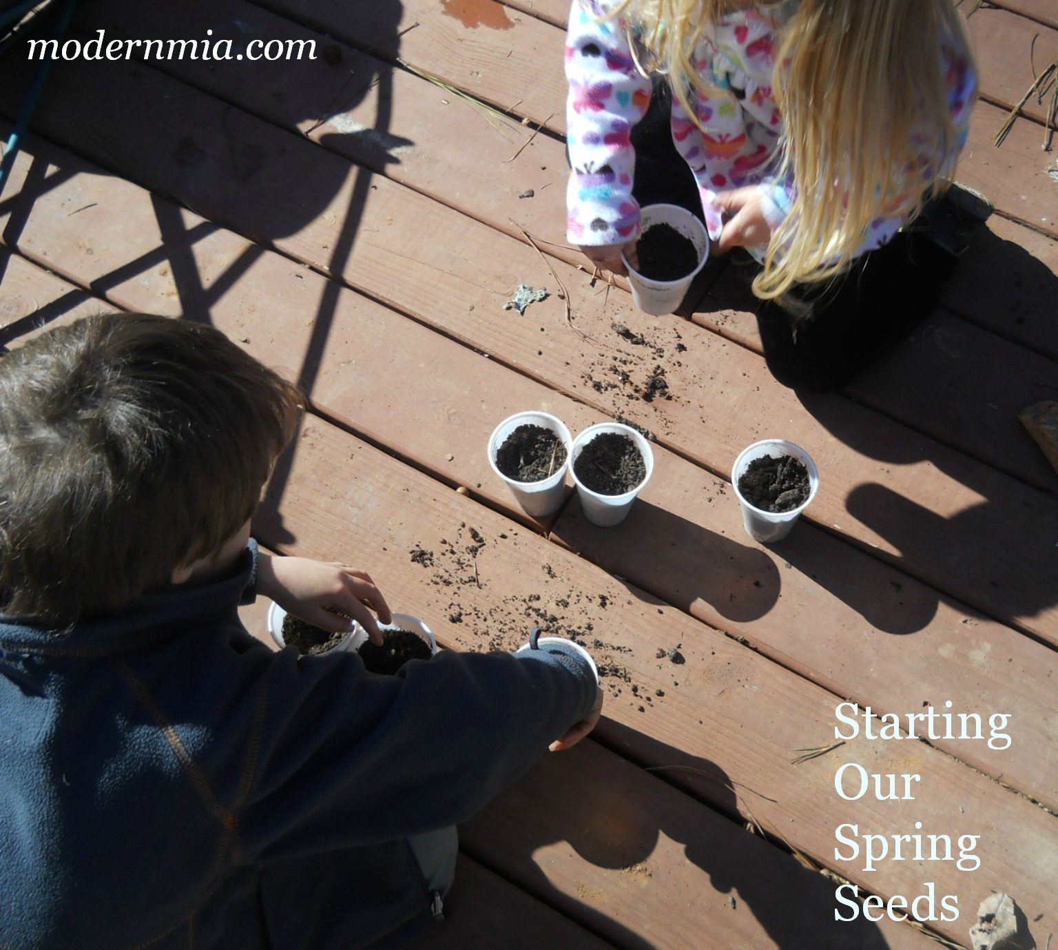 Starting Our Seeds, Part I by Modern Mia Gardening