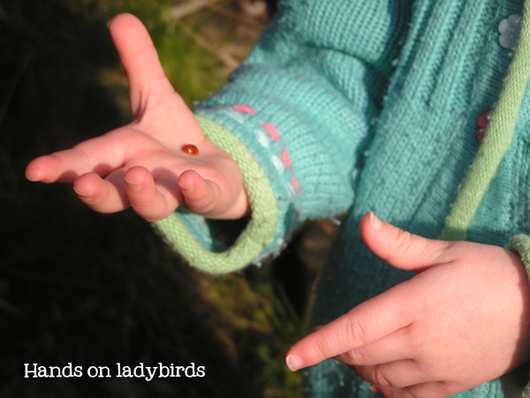 Hands on Ladybugs Kids in Nature