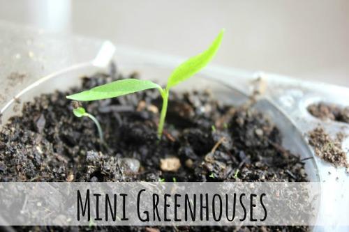 Make Your Own Mini Greenhouse by Eliza K Prints