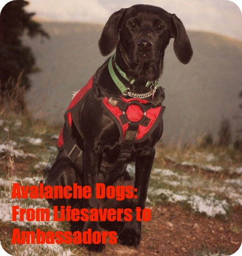Avalanche Dogs: From Lifesavers to Ambassadors, These Dogs Have What It Takes by Brave Ski Mom