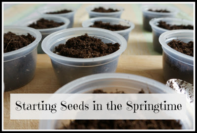 starting seeds springtime button