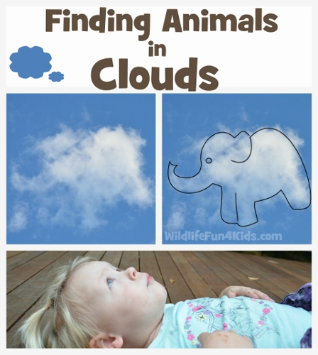 Finding Animals in Clouds by Wildlife Fun 4 Kids