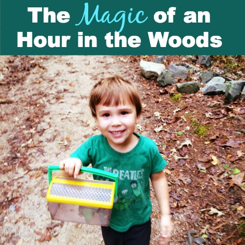 The Magic of an Hour in the Woods by CragMama