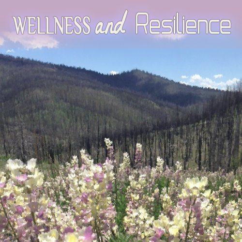 Wellness and Resilience by Velo Mom
