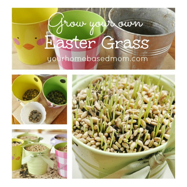 Grow Your Own Grass by Your Homebased Mom