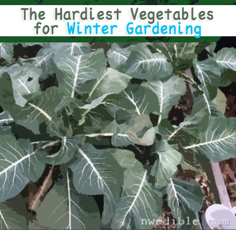 The Hardiest Vegetables For Winter Gardening by Northwest Edible Life