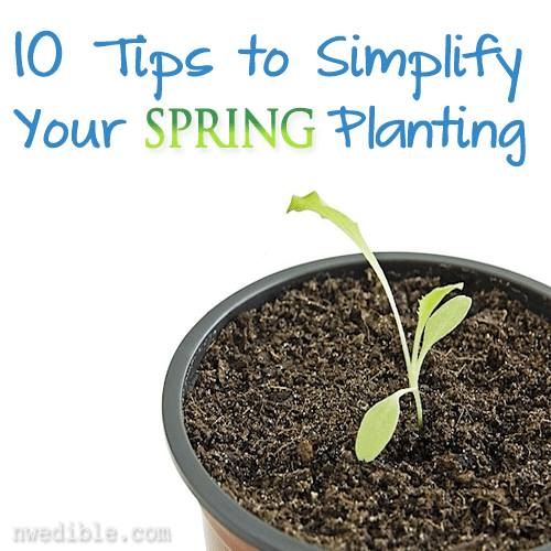 10 Tips to Simplify Your Spring Planting