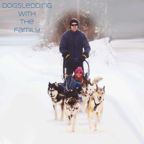 Family Dog Sledding by Family Adventures in the Canadian Rockies