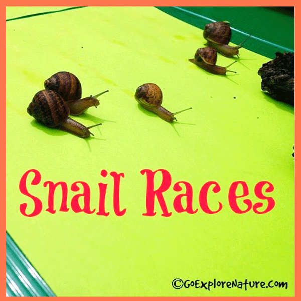 Backyard Nature Game: Snail Races by Go Explore Nature