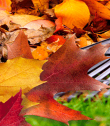 Fall Leaf Art Round-Up