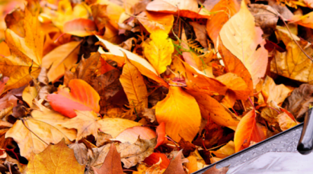 Fall Leaf Art Round-Up