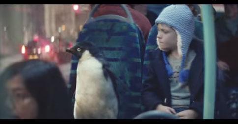 Videos We Love: Meet Monty the Penguin