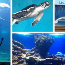 Maui Family Style: Maui Ocean Center