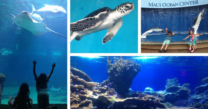 Maui-Ocean-Center-featured