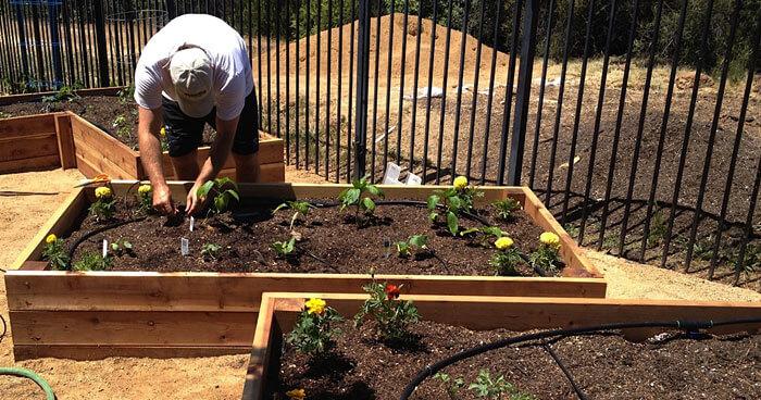 Raised Garden Beds Filled