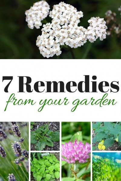7 Remedies From Your Garden