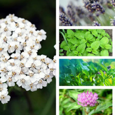 7 Home Remedies From Your Garden