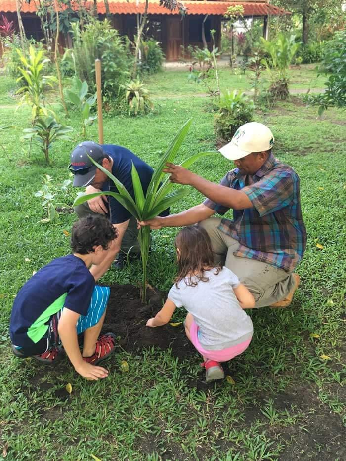 coconut-tree-tortuguero