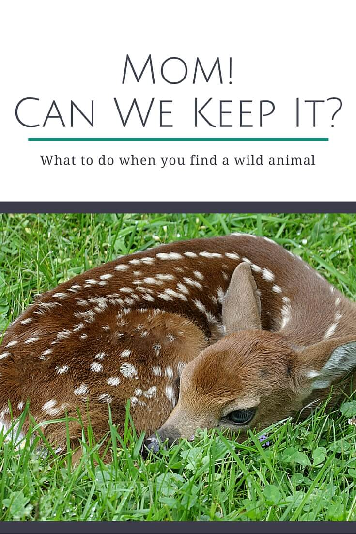 Mom! Can We Keep It? what to do when you find a wild animal